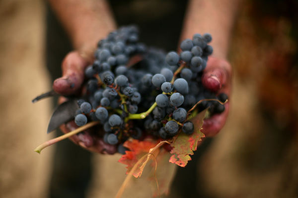 spain and japan wine industry factbook The british wine and spirit trade association has warned this will damage the uk's wine industry spain and france this year's business insider intelligence.