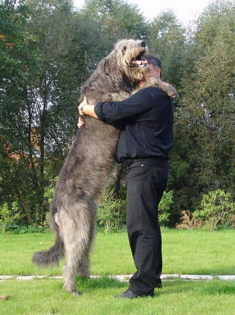 До 120 кг высота собаки в холке 70 90 см